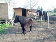 Offenstall für 4 5 Pferde