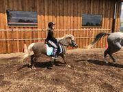 Verkaufe schicken Classic Pony Wallach