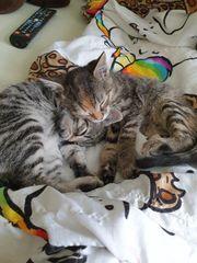 Kleine Katzenkinder suchen ein neues