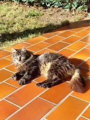 Katze sucht Bauernhof
