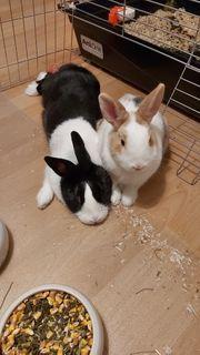 Zwei Kaninchen mit Zubehör für