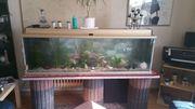 Aquarium von Juwel 375 Liter