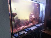 Aquarium 100x50x60