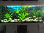 Fische und Pflanzen fürs Aquarium