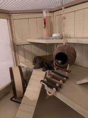 Kleintiergehege aus Holz mit komplettem