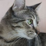 Katzenjunge Amando wartet auf Post