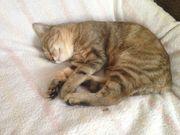 Katze weiblich vermisst