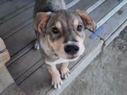 Hoover quirliger Hundebub ca 5