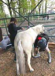 Kindergeburtstag Geburtstagsfest mit Pony