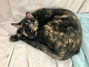 Boo sehbehinderte Katze ca 6