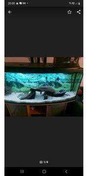 Aquarium mit unter Schrank