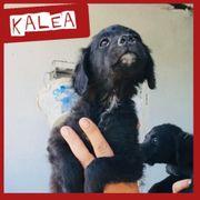 Darf sich Kalea auf ein