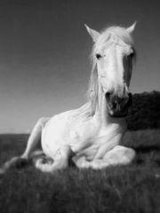 Erfahrene Reiterin sucht Pferd Reitbeteiligung