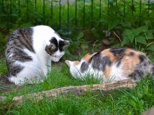 Katzen Jamie und Carla suchen