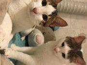 Katzenkinder Spotty und Lotti suchen