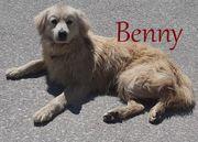 Kokoni-Mischling Benny wurde von seinen