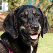 Nola 7 Monate - Mischling - Tierhilfe
