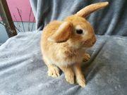 liebe Kaninchen babys Fur Spende