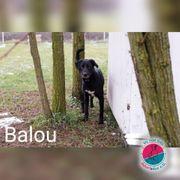 Balou - aktiver Schmusebär