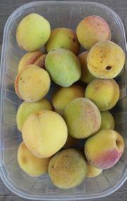 Weinbergpfirsich Früchte aus natürlicher Ernte