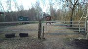 Offenstallplatz für 1 Pferd in