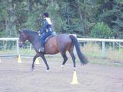 Schweren Herzens meine beiden Pferde