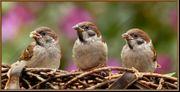 Private Futterspender gesucht - Wildvogelhilfe - Streunerkatzen -