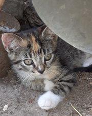 Hübsches buntes Kätzchen sucht ein