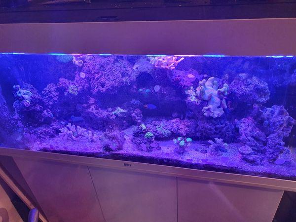 Meerwasseraquarium Komplettset 240 Liter