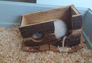 Rattemädchen Cherry sucht neues Zuhause