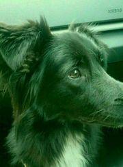 Hund Django sucht dringend ein