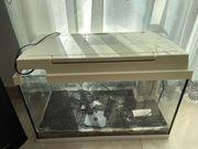Juwel Aquarium Kompllet 60x30cm mit