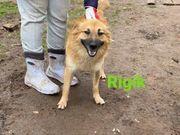 Familienhund Rigik sucht seine Familie