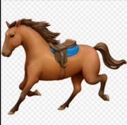 Suche ein umgänglichen Wegbegleiter Pferd