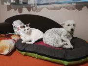 Misho - mag Hunde und andere