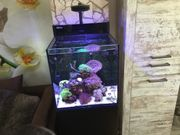 Red Sea Max Nano Meerwasseraquarium