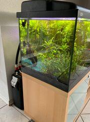 Aquarium mit Zubehör und Fische