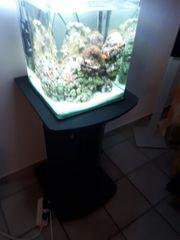 Meerwasser aquarium nano 30 Liter