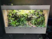 XXL Regenwaldterrarium günstig abzugeben auch