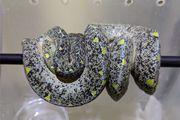Suche Morelia viridis Gläser Baumpython