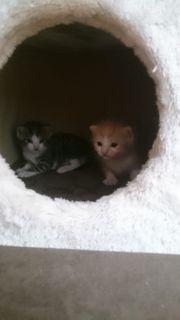 für 2 Katzenbabys zu Hause