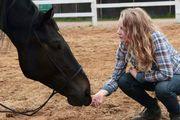 Mobiler pferdegerechter Reitunterricht Beritt