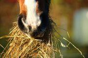 Heu Pferdeheu Quaderballen Rundballen Heuballen