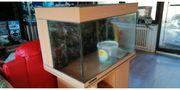 Meerwasser aquarium set