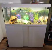 Verkaufe ein komplettes Aquarium