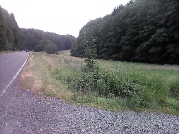 Wiese zwischen Seeheim und Ober-Beerbach