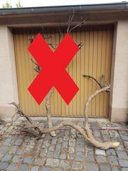 Buchsbaumholz Stamm Geäst ca 100