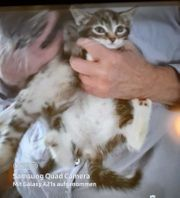 Kätzchen 12 Wochen alt