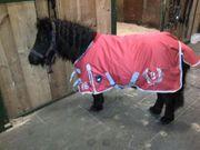 Reitbeteiligung Pflegepferd Ponyreiten für Kinder