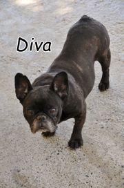 Darf Diva nun ihre eigene